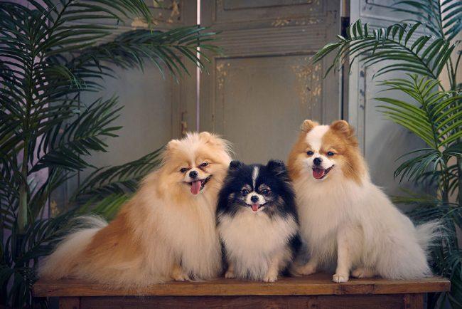 Cute Pet Photoshoot