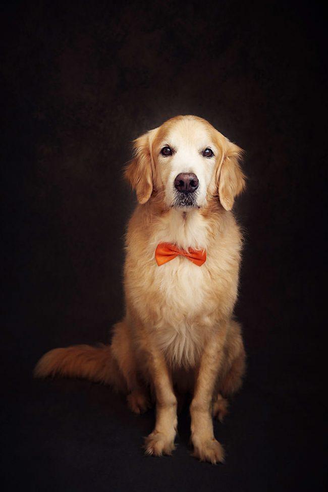 Pet Bowtie Photo