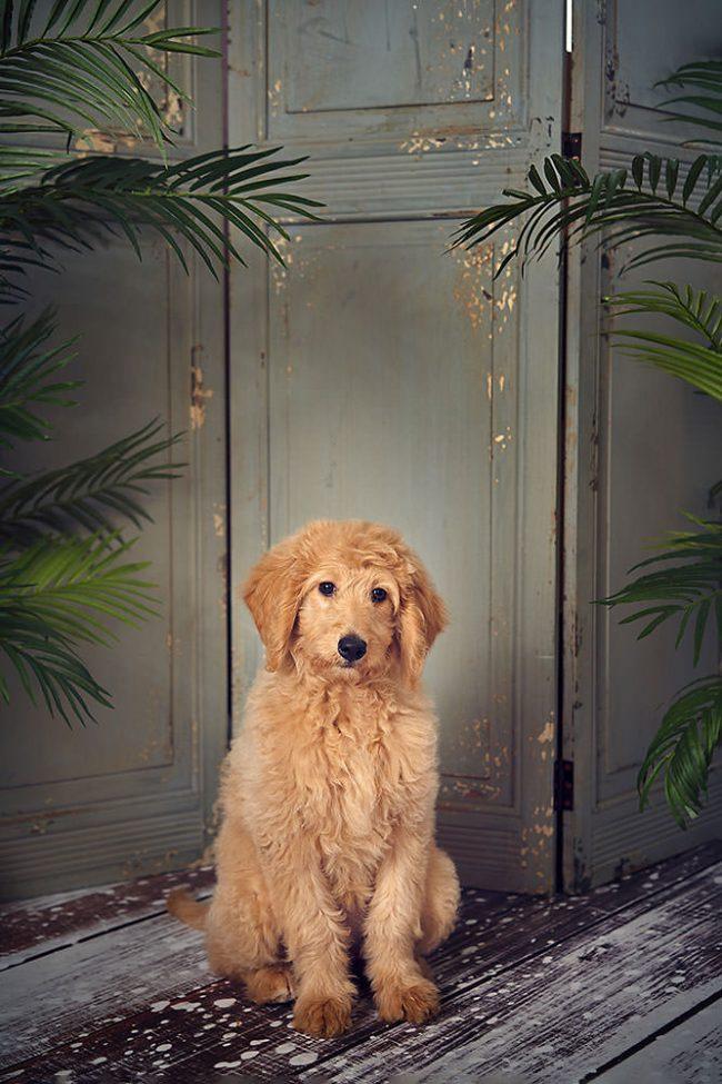 Pet Portrait Photo Shoot