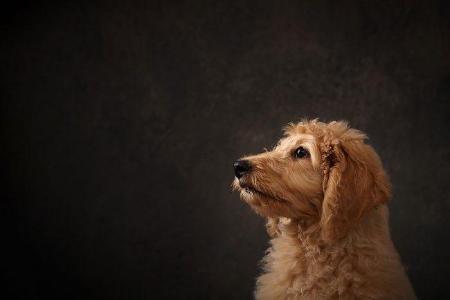 Professional Pet Photo Shoot SG