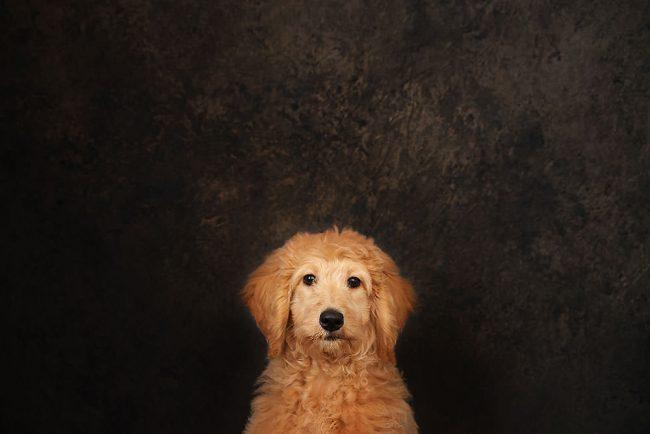 Professional Pet Photo Studio